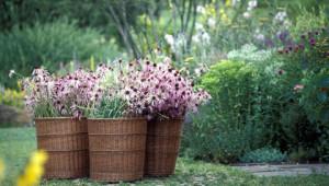 Dr.Hauschka medicinal herb garden