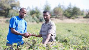 Dr. Hauschka Cultivateurs partenaires dans le monde